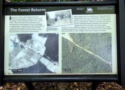 The Forest Returns Marker image. Click for full size.