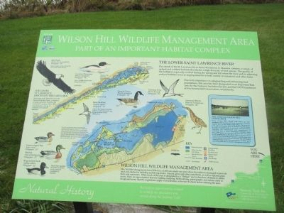 Wilson Hill Wildlife Management Area Marker image. Click for full size.