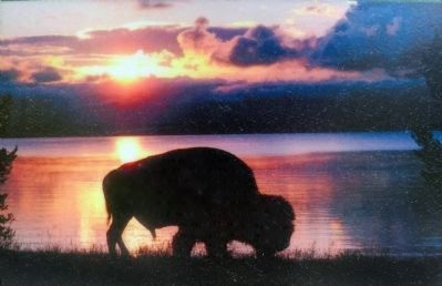 Bison image. Click for full size.