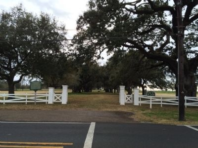 Manresa House Oak Trees (Across the street from retreat) image. Click for full size.