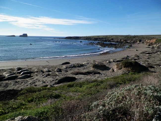 Elephant Seals Hauled-out on the Beach image. Click for full size.