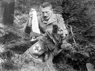 A British Kit dog image. Click for full size.