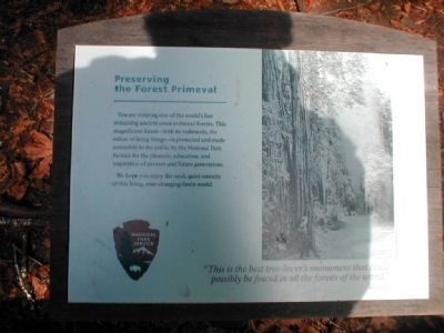 Preserving the Forest Primeval Marker image. Click for full size.