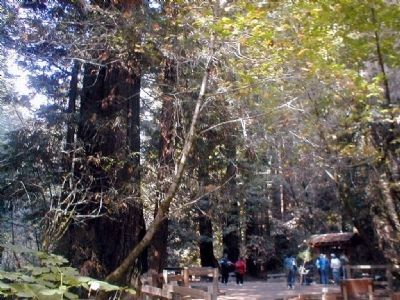 Muir Woods-Visitor Center in the background image. Click for full size.