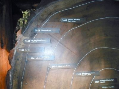 Muir Woods-close up of the time line in a Redwood Tree trunk image. Click for full size.
