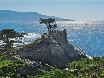 Lone Cypress image. Click for full size.