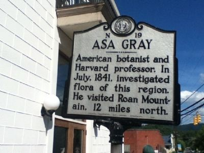 Asa Gray Marker image. Click for full size.