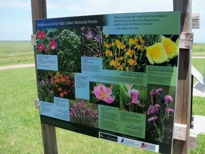 Wildflowers of the Willa Cather Memorial Prairie Marker image. Click for full size.