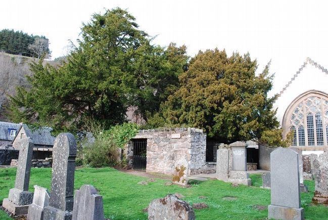 Fortingall Yew Tree image. Click for full size.