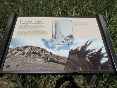Petrified Tree Marker image. Click for full size.