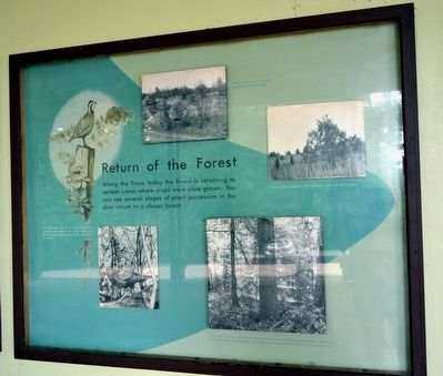 The Return of the Forest Marker image. Click for full size.