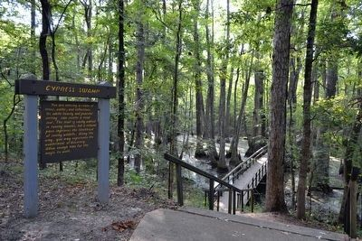 Cypress Swamp Nature Trail Head image. Click for full size.