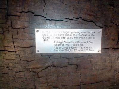 Old Giant Redwood Tree Marker image. Click for full size.