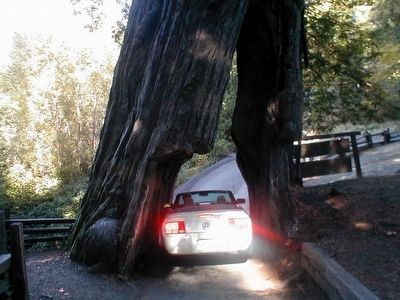 The Shrine Tree-Car entering image. Click for full size.