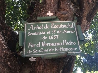 Previous esquisuchil marker, still hanging in the tree. image. Click for full size.