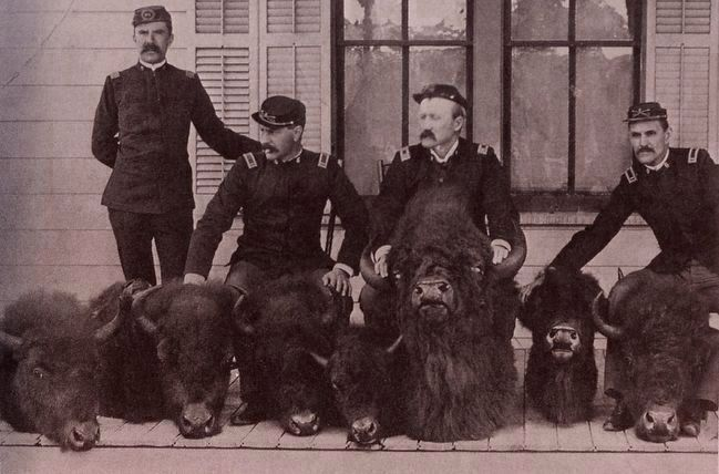 <i>Heads of poached bison seized by military, probably confiscated from Ed Howell</i> image. Click for full size.