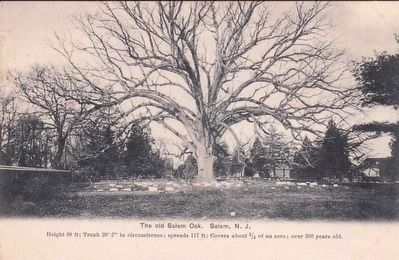 <i>The old Salem Oak, Salem, N.J.</i> image. Click for full size.