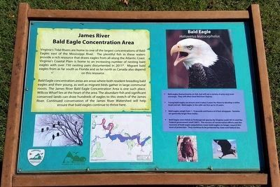 James River Bald Eagle Concentration Area image. Click for full size.
