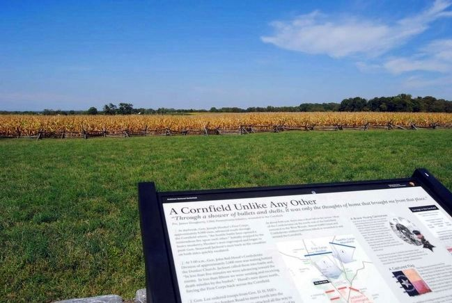A Cornfield Unlike Any Other Marker and the Cornfield image. Click for full size.