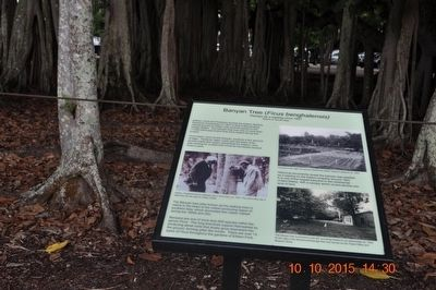 Banyan Tree (Ficus benghalensis) Marker image. Click for full size.
