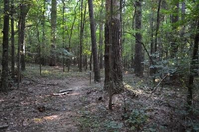 Beginning of the Southern Pines Nature Trail image. Click for full size.