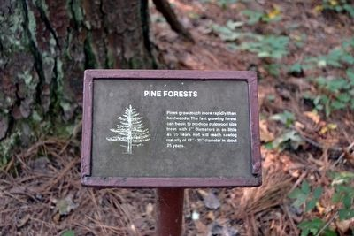 Pine Forests Interpretive Sign image. Click for full size.