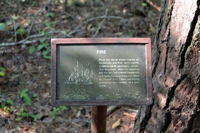 Fire Interpretive Sign image. Click for full size.