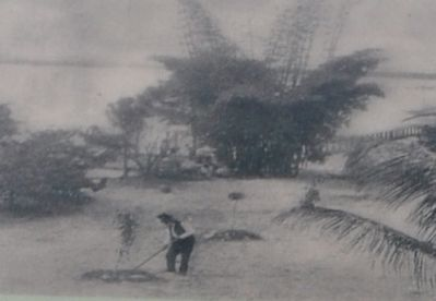 Edison's father, Samuel, planting a tree on the property in 1891. image. Click for full size.