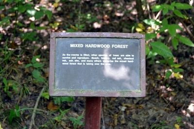 Mixed Hardwood Forest Interpretive Sign image. Click for full size.