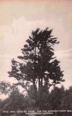 <i>Pine Tree Used as Model For the Vermont State Seal <br> Arlington, Vermont</i> image. Click for full size.
