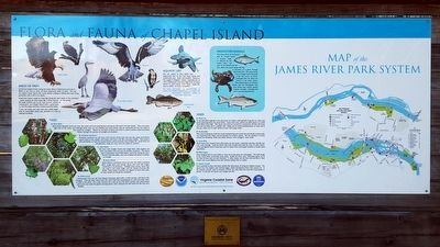 Chapel Island Flora & Fauna image. Click for full size.