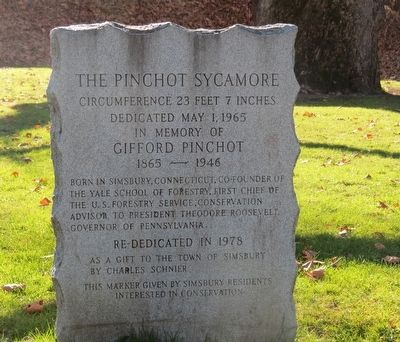 The Pinchot Sycamore Marker image. Click for full size.