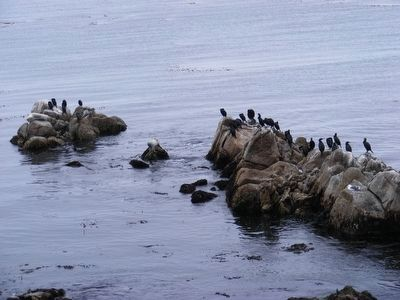 Seal and birds on the rocks image. Click for full size.