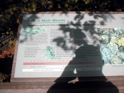 Fall in Muir Woods Marker image. Click for full size.