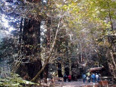 Fall in Muir Woods image. Click for full size.