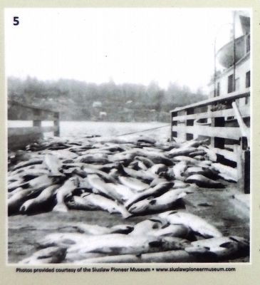 Marker Photo Detail: Salmon on the docks waiting to be processed image. Click for full size.