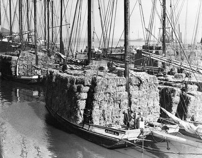 The <i>Annie L.,</i> a San Francisco scow schooner image. Click for full size.