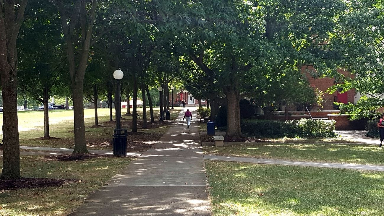 Allee of trees on the mall in front of library image. Click for full size.