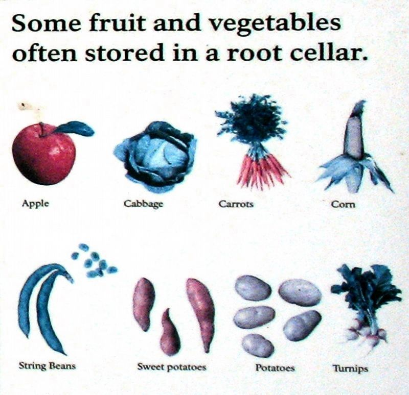 Some Fruits and Vegetables Often Stored in a Root Cellar image. Click for full size.