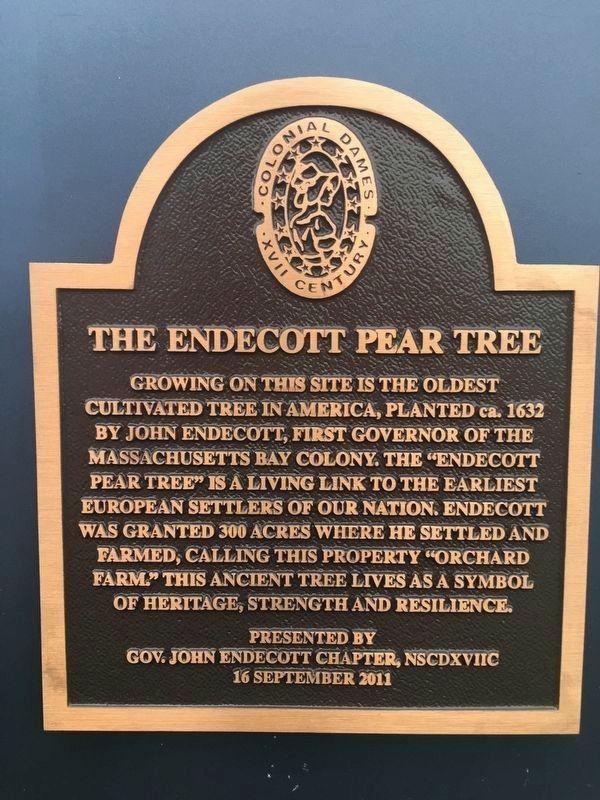 The Endecott Pear Tree Historical Marker