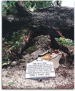 Marker and Tree Felled by Storm image. Click for full size.