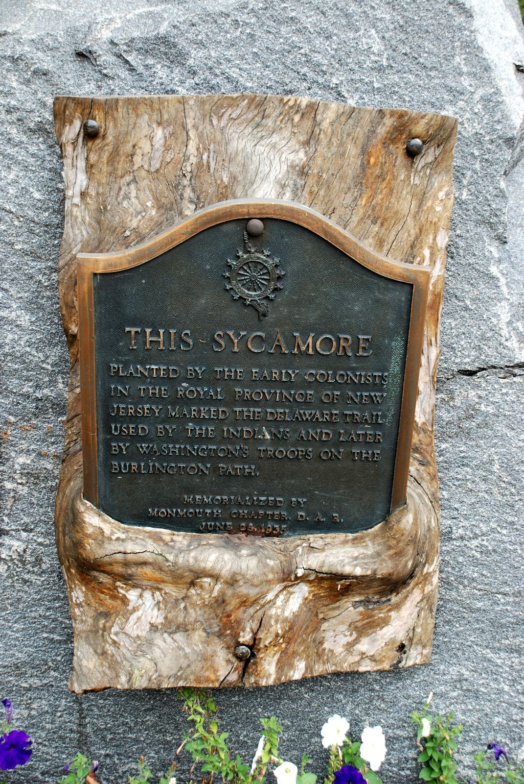 This Sycamore Marker