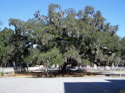 The Candler Oak, as mentioned in the Marker image. Click for full size.