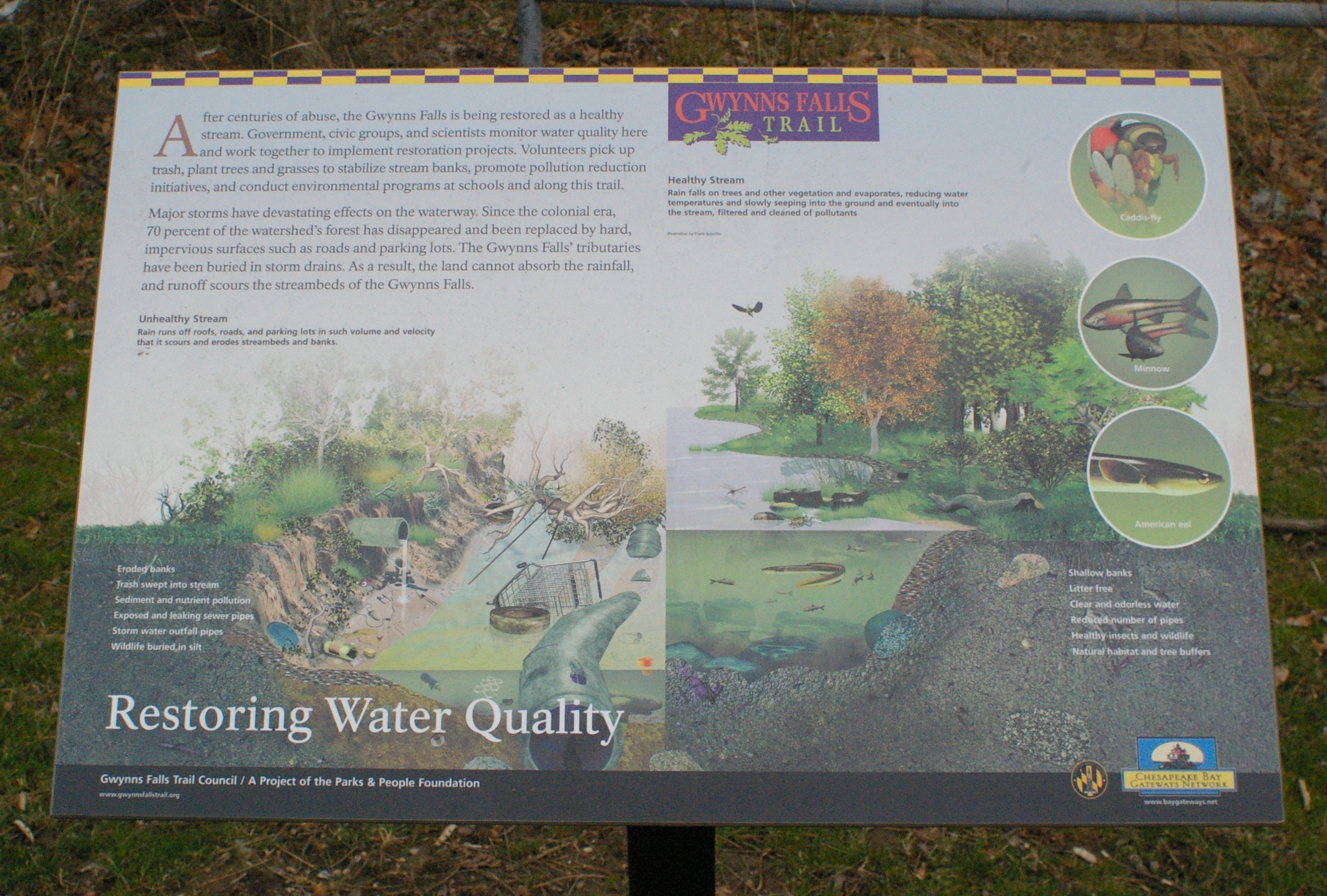 Restoring Water Quality Marker