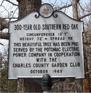 300 Year Old Southern Red Oak Marker image. Click for full size.