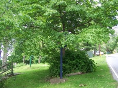 Marker is in a small park concealed by a tree. image. Click for full size.