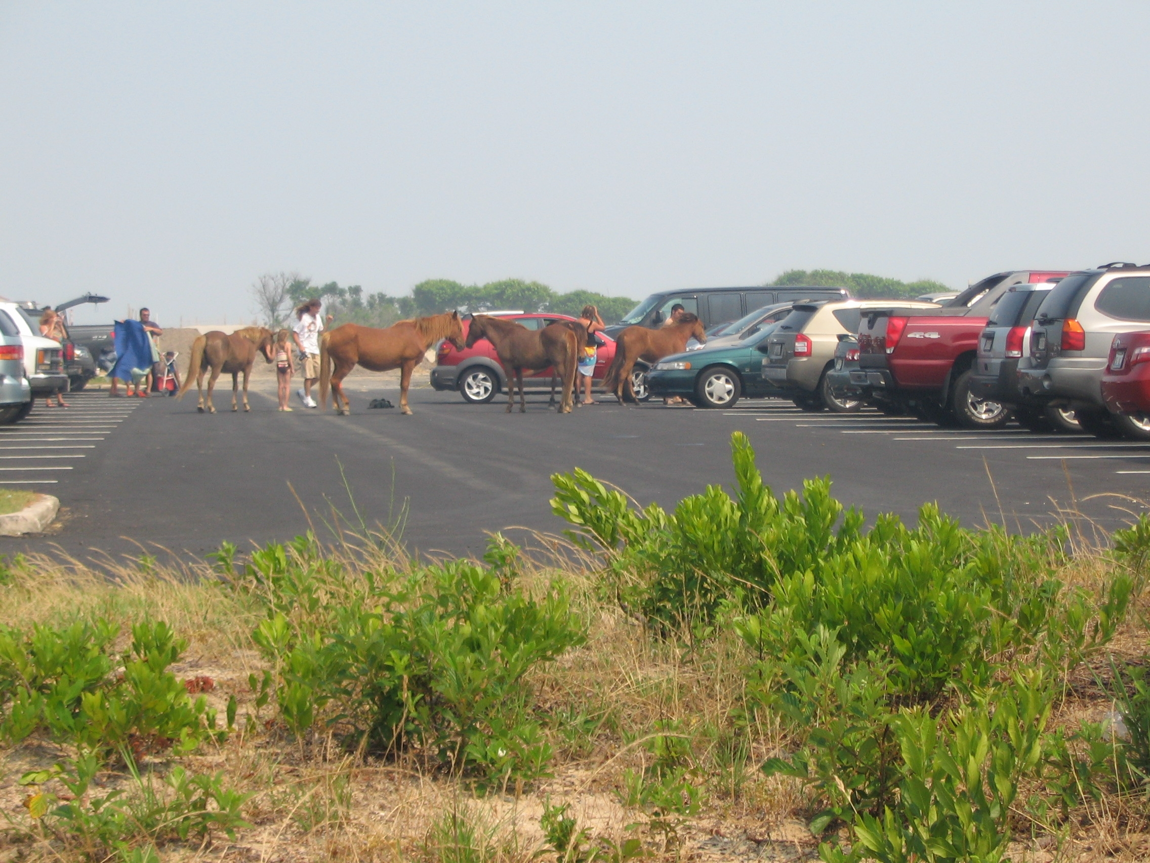 Ponies in the Parking Lot