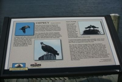 Osprey Marker image. Click for full size.