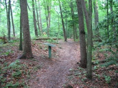 Marker beside the Trail along Lee's Last Line Earthworks image. Click for full size.
