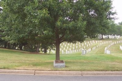 African American Veterans of the Korean War Marker and memorial tree image. Click for full size.